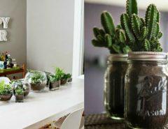decorate-with-cactus