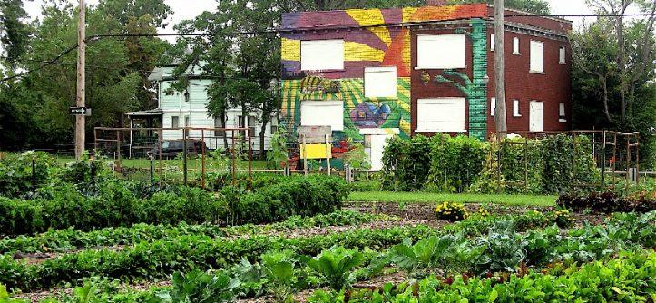 Organic Urban Food Garden