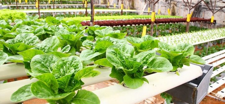 build a hydroponic garden