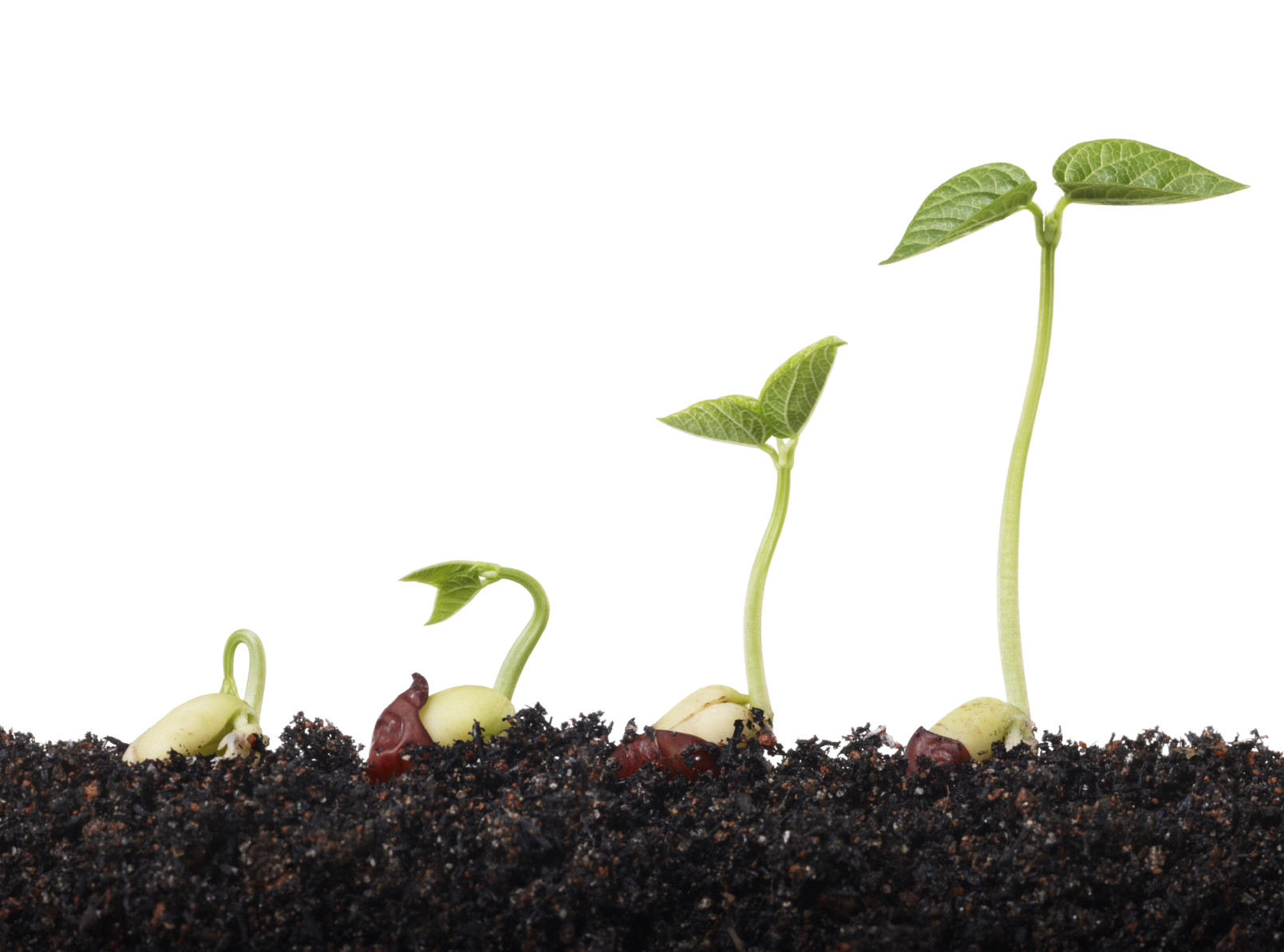 stages of seed growth