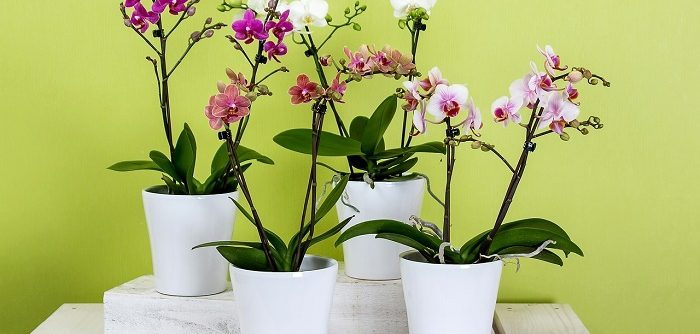 decorate flower pots ideas