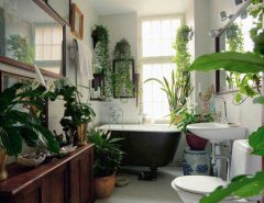 good plants for the bathroom