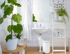 good plants for the bathroom