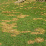 how to repair a bad lawn