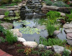 Traditional Backyard Ponds