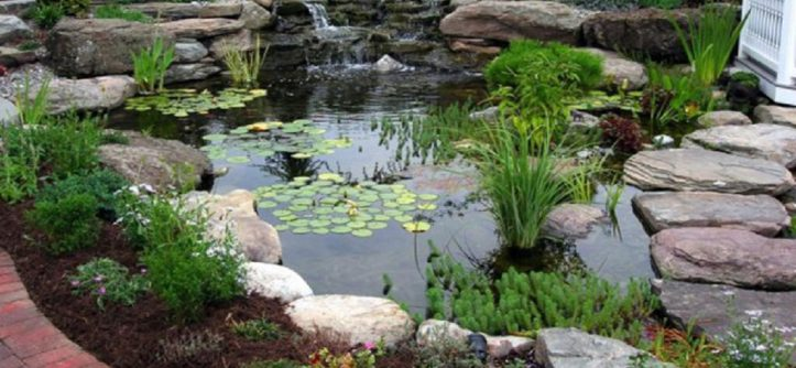 Traditional Backyard Ponds