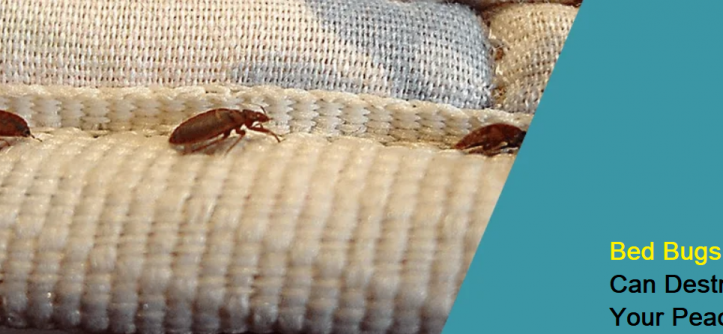 Bed Bugs Can Destroy