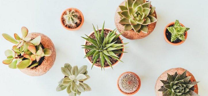 Cactus decor tips