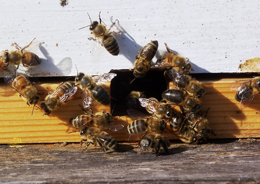 Prevention or get rid of bees