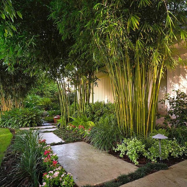 How to plant bamboo in your garden